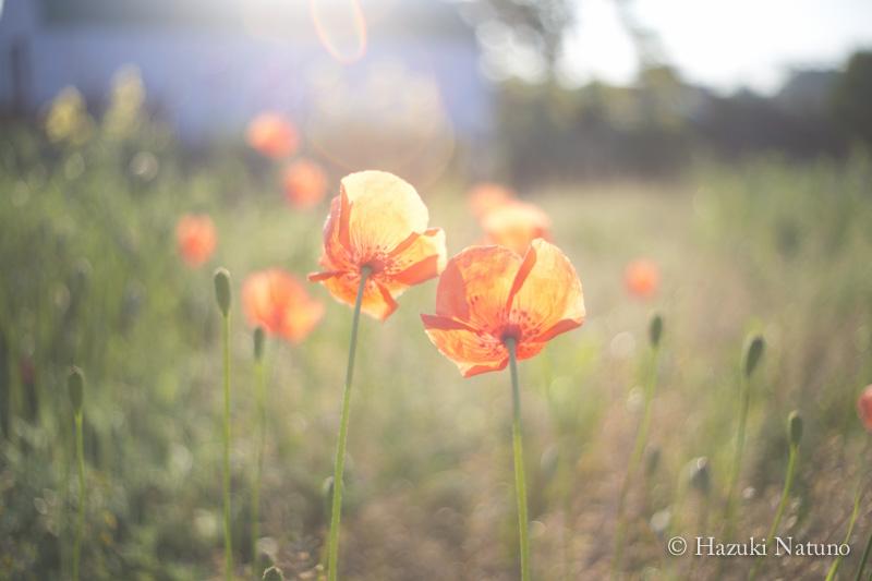 どんな暗闇の中であっても、花は咲くだろう