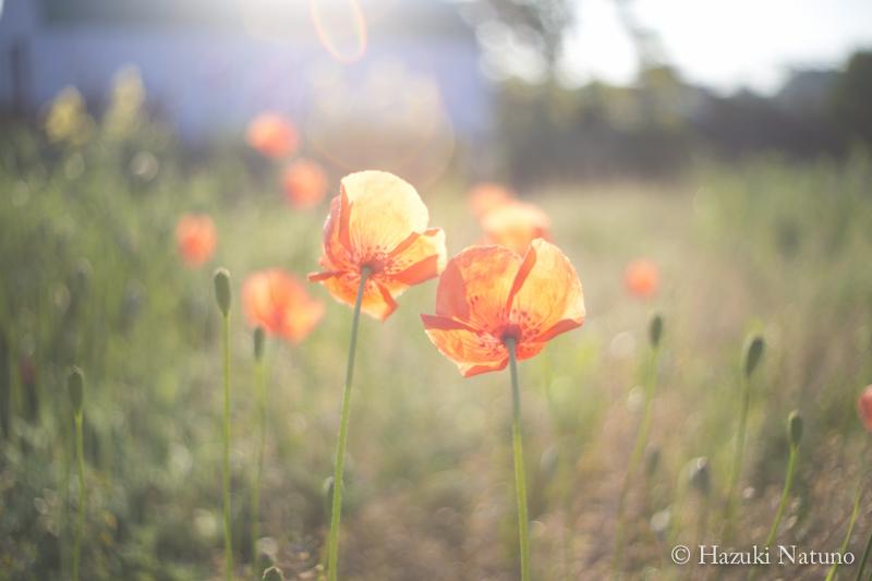愛とは「相手の幸せを願うこと」。 愛するとは「相手の幸せのために行動すること」。