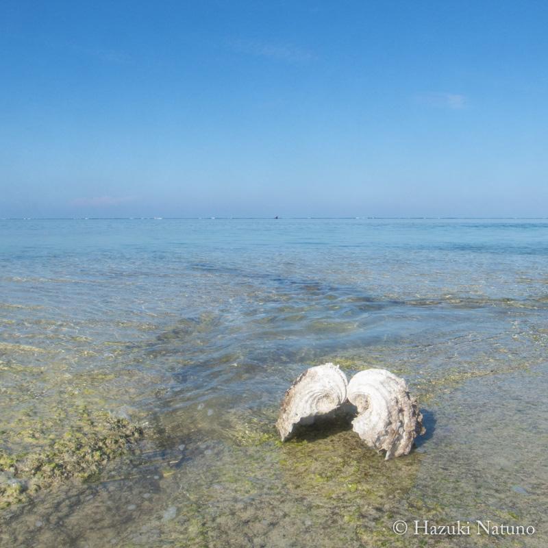 海とシャコガイ