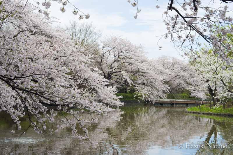 愛と別れ 〜儚く散る、桜のように〜