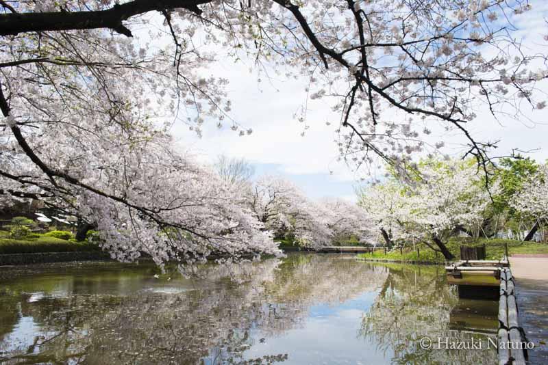 2月29日鎌倉でのトークイベントの中止のお知らせ